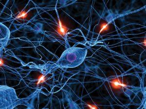 Suzanne Zeedyk - Brain Development -Trauma-0554-wBrainDev-Synapses-w